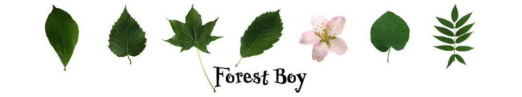 Forest Boy ホームページ